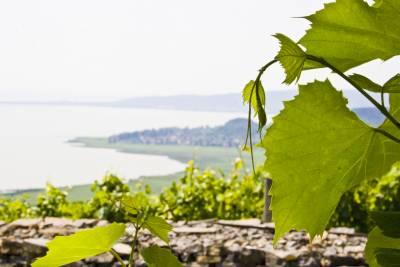 Ünnep Magyarországon. Barcs és Balaton 01-10. Július 2008