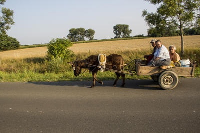 Ungarn. Sommerferien 2012.